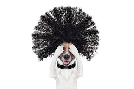 slechte haardag hond klaar mooi in het wellnesscentrum spa salon, op een witte achtergrond te kijken, haren gone wild