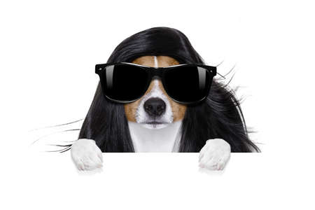 hairdresser dog ready to look beautiful by comb, scissors, dryer, and spray at the wellness spa salon, isolated on white background behind a white banner or placard poster