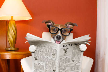 humor: jack russell dog reading newspaper on a chair or  sofa , couch, or lounger , in living room , table and reading light to the side