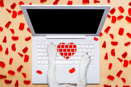 dog office worker in  love on happy valentines day,  typing in a  pc computer laptop,  isolated on desk  background,full of red rose petals,dating online on a chat