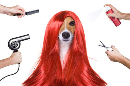 mode: hairdresser dog ready to look beautiful by comb, scissors, dryer, and spray at the wellness spa salon, isolated on white background