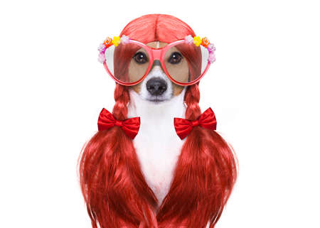 scissors: hairdresser dog ready to look beautiful by comb, scissors, dryer, and spray at the wellness spa salon, isolated on white background wearing funny nerd glasses