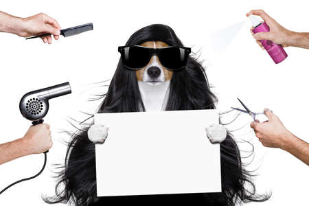 hairdresser: hairdresser dog ready to look beautiful by comb, scissors, dryer, and spray at the wellness spa salon, isolated on white background holding a white banner or placard