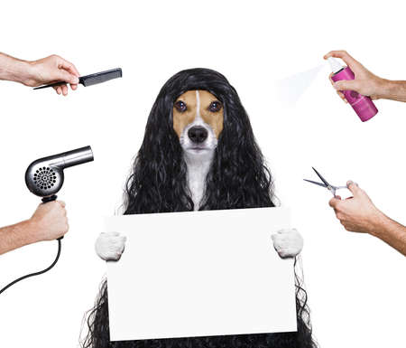 hairdresser dog ready to look beautiful by comb, scissors, dryer, and spray at the wellness spa salon, isolated on white background holding a white banner or placard