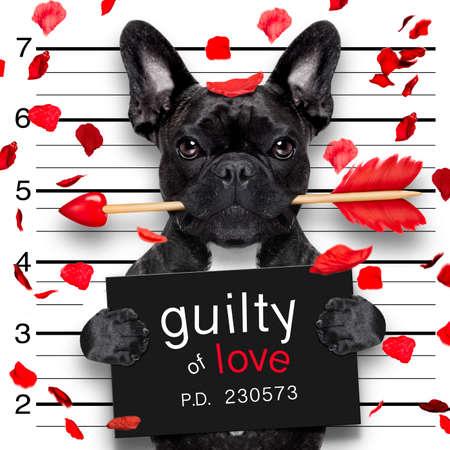 Valentines bulldog hond met een roos in de mond als een mugshot schuldig voor de liefde