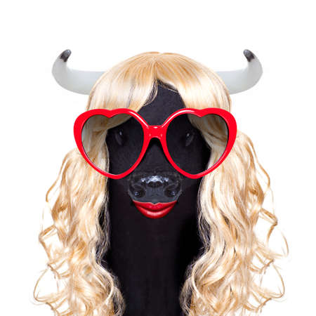 funny crazy silly calf cow or cattle wearing a blonde curly wig for mardi gras carnival or just for fun party, isolated on white background, with fancy heart sunglasses