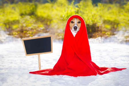 shiver: jack russell dog, outside freezing and shivering with a red blanket  , winter snow and cold , banner or placard to the side Stock Photo