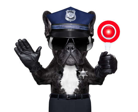 funny glasses: POLICE DOG ON DUTY WITH stop sign and hand , isolated on white blank background.