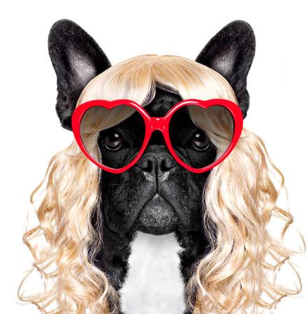 面白いのクレイジー愚かなフレンチ ブルドッグ犬マルディグラのカーニバルのまたはちょうど楽しみのため金髪の巻き毛のかつらを身に着けている 写真素材