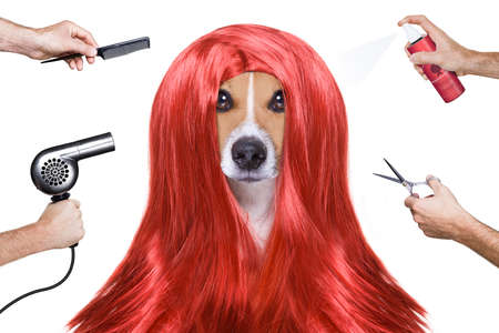 hairdresser dog ready to look beautiful by comb, scissors, dryer, and spray at the wellness spa salon, isolated on white background