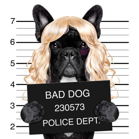 funny glasses: diva lady girl  dog posing for a lovely mugshot, as a criminal and thief with blonde wig