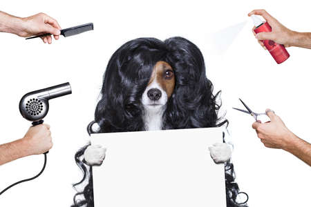 hand: hairdresser dog ready to look beautiful by comb, scissors, dryer, and spray at the wellness spa salon, isolated on white background holdimg a white banner or placard Stock Photo