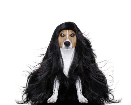 Friseur hund bereit von kamm schön aussehen schere trockner und