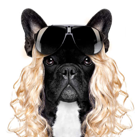 funny crazy silly french bulldog dog wearing a blonde curly wig for mardi gras carnival or just for fun party, isolated on white background, with cool black  sunglasses