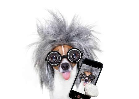 Slimme en intelligente Jack Russell hond met nerd glazen dragen van een grijs haar nemen van een selfie met smartphone of mobiele telefoon, geïsoleerd op een witte achtergrond