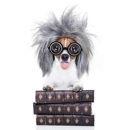 smart and intelligent jack russell dog with nerd glasses sticking out the tongue wearing a grey hair wig on a book stack , isolated on white background