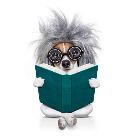 smart and intelligent jack russell dog with nerd glasses  wearing a grey hair wig reading  a book  , isolated on white background Stock Photo