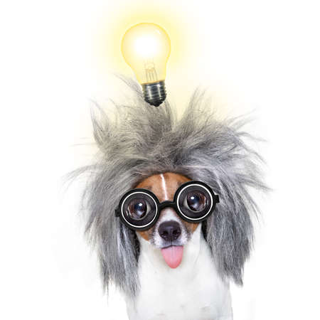 dictionary: smart and intelligent jack russell dog with nerd glasses  wearing a grey hair  with an idea  with light bulb , isolated on white background
