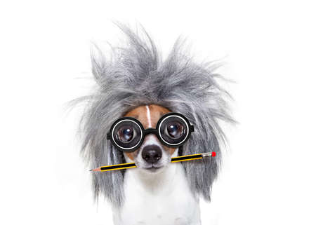 grey: smart and intelligent jack russell dog with nerd glasses  wearing a grey hair  with pen or pencil in mouth  , isolated on white background