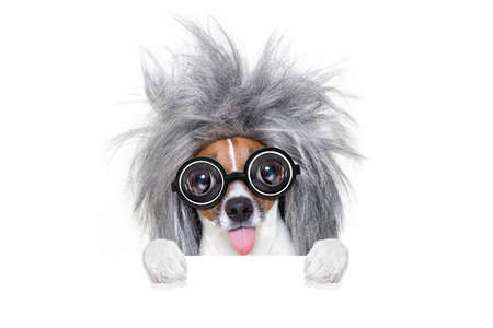 funny glasses: smart and intelligent jack russell dog with nerd glasses  wearing a grey hair  behind banner or placard, isolated on white background