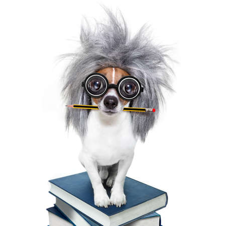 smart and intelligent jack russell dog with nerd glasses  wearing a grey hair wig on a book stack with pen or pencil in mouth  , isolated on white background