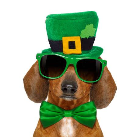 Dackel sausage dog mit St. Patrick Day Hut und Sonnenbrille, isoliert auf weißen Hintergrund Standard-Bild - 73201337