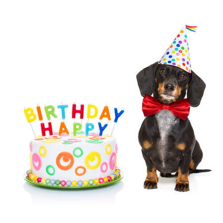 happy holidays: dachshund or sausage  dog  hungry for a happy birthday cake with candles ,wearing  red tie and party hat  , isolated on white background