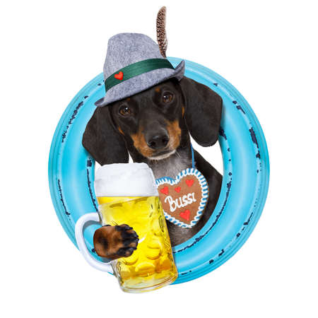 beerfest: bavarian dachshund or sausage  dog with  gingerbread and beer mug, isolated on white background , ready for the beer celebration festival in munich,