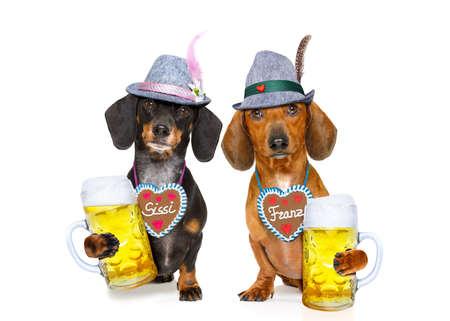 octoberfest: bávaro dachshund o salchichas perros pareja con pan de jengibre y taza aislados en fondo blanco, listo para la celebración del festival de la cerveza en Munich, Foto de archivo