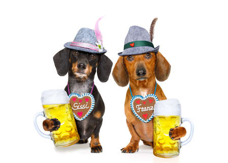 Bayerische Dackel oder Wursthunde Paar mit Lebkuchen und Bechern auf weißen Hintergrund, bereit für das Bier Feier Festival in München,
