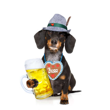 pretzel: bavarian dachshund or sausage  dog with  gingerbread and  mug  isolated on white background , ready for the beer celebration festival in munich,