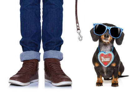bavarian dachshund or sausage  dog with  gingerbread and  owner   isolated on white background , ready to go for a walk to munich festival Stock Photo