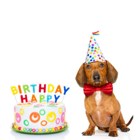 plate: dachshund or sausage  dog  hungry for a happy birthday cake with candles ,wearing  red tie and party hat  , isolated on white background