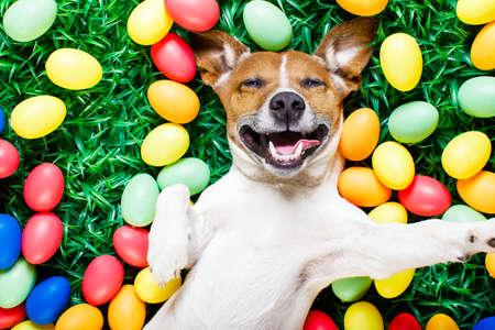 lapin: drôle jack russel chien de lapin de Pâques avec des ?ufs sur l'herbe autour de prendre un selfie rieurs smartphone