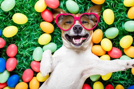 面白いジャック ラッセル スマート フォン、サングラスで selfie を取って笑って芝生の上の周りの卵イースター バニー犬 写真素材