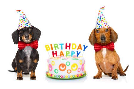 Deux chiens de teck ou de saucisse affamés d'un gâteau heureux avec des bougies, portant une cravate rouge et un chapeau de fête, isolé sur fond blanc Banque d'images