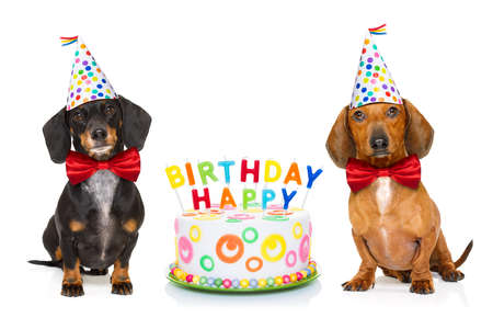 couple of two dachshund or sausage  dogs  hungry for a happy birthday cake with candles ,wearing  red tie and party hat  , isolated on white background Stockfoto