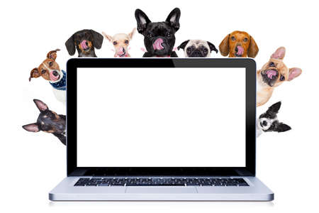find: group row of different dogs behind pc laptop computer screen , isolated on white background licking hungry with tongue Stock Photo