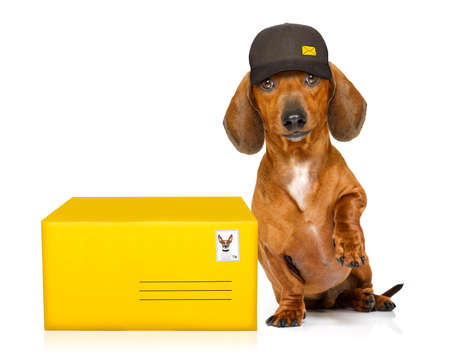 box: dachshund sausage dog delivering a big brown package as a postman with cap , isolated on white background Stock Photo