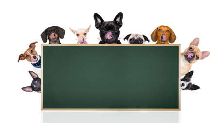 board: group row of different dogs behind a blank banner placard blackboard, isolated on white background licking hungry with tongue