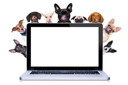 Groep rij van verschillende honden achter pc laptop computer scherm, geïsoleerd op witte achtergrond likken hongerig met tong