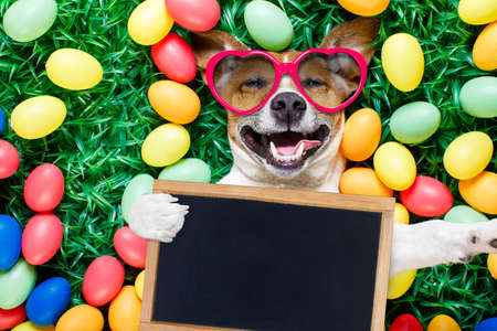 funny jack russell easter bunny  dog with eggs around on grass  laughing taking a selfie with smartphone , holding a blackboard