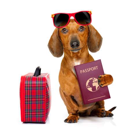 voyage: teckel ou chien saucisse vacances vacances d'été avec passeport ou document de billets et un sac ou bagages, isolé sur fond blanc