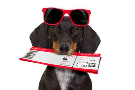 Dachshund ou cão de salsicha em férias de verão com bilhete de avião com avião isolado no fundo branco Imagens