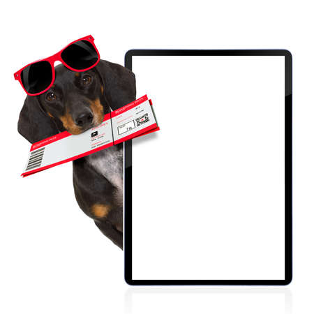 find: dachshund or sausage  dog on summer vacation holidays with airline flight ticket  isolated on white background, behind pc computer laptop screen