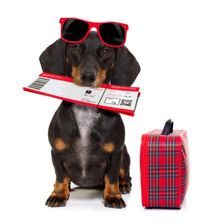 teckel of worst hond op zomervakantie vakantie met vliegticket vliegticket en tas of bagage, geïsoleerd op een witte achtergrond Stockfoto