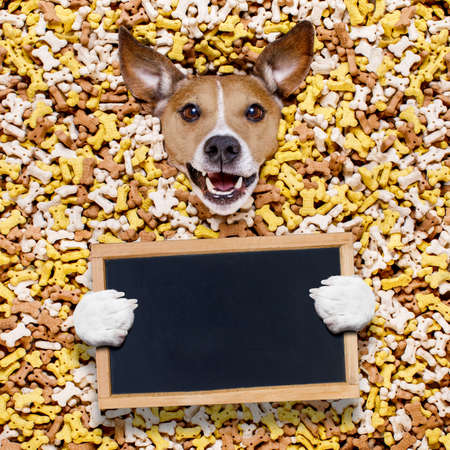 hungry jack russell dog inside a big mound or cluster of food , isolated on mountain of cookie bone  treats as background,with  a blank empty banner or placard blackboard