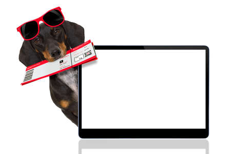 screen: dachshund or sausage  dog on summer vacation holidays with airline flight ticket  isolated on white background, behind pc computer laptop screen