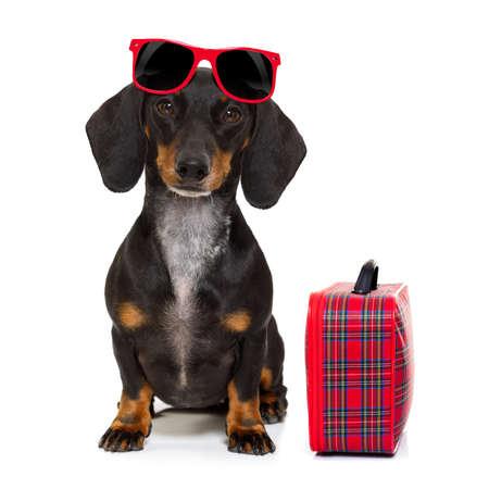 voyage: teckel ou chien saucisse vacances vacances d'été avec des lunettes de soleil et sac ou bagages, isolé sur fond blanc Banque d'images