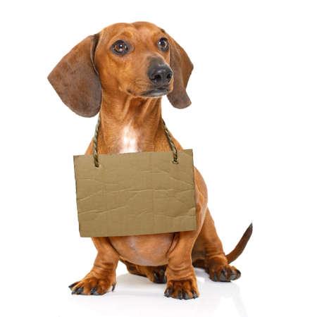 잃어버린 노숙자 닥 스 훈 트 소시지 강아지 말하는 목, 텍스트와 흰 배경에 고립 주위 골, 골판 매 개 : 입양